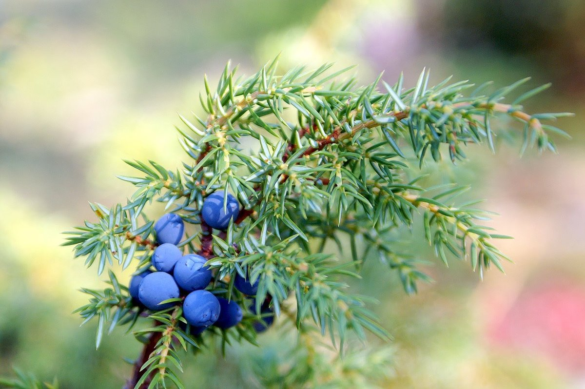 Лекарственные растения по знаку Зодиака